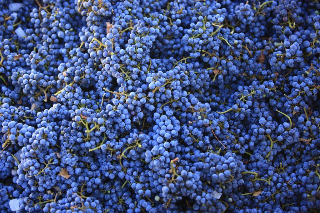 wine hikes 5
